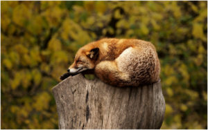 wellness on whyte - fox