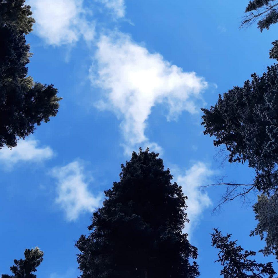 Wellness on Whyte - mindfulness